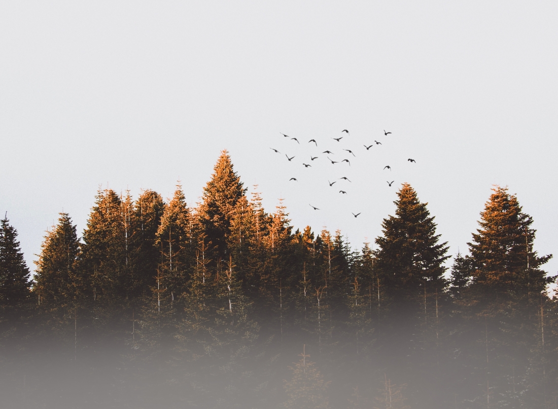 Canva - Flock Of Birds