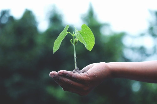 Canva - Person Holding A Green Plant